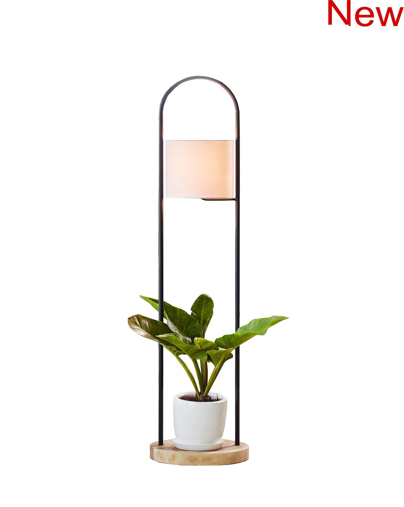 Acacia lamp and planter, without pot (Knock Down) product photo #2